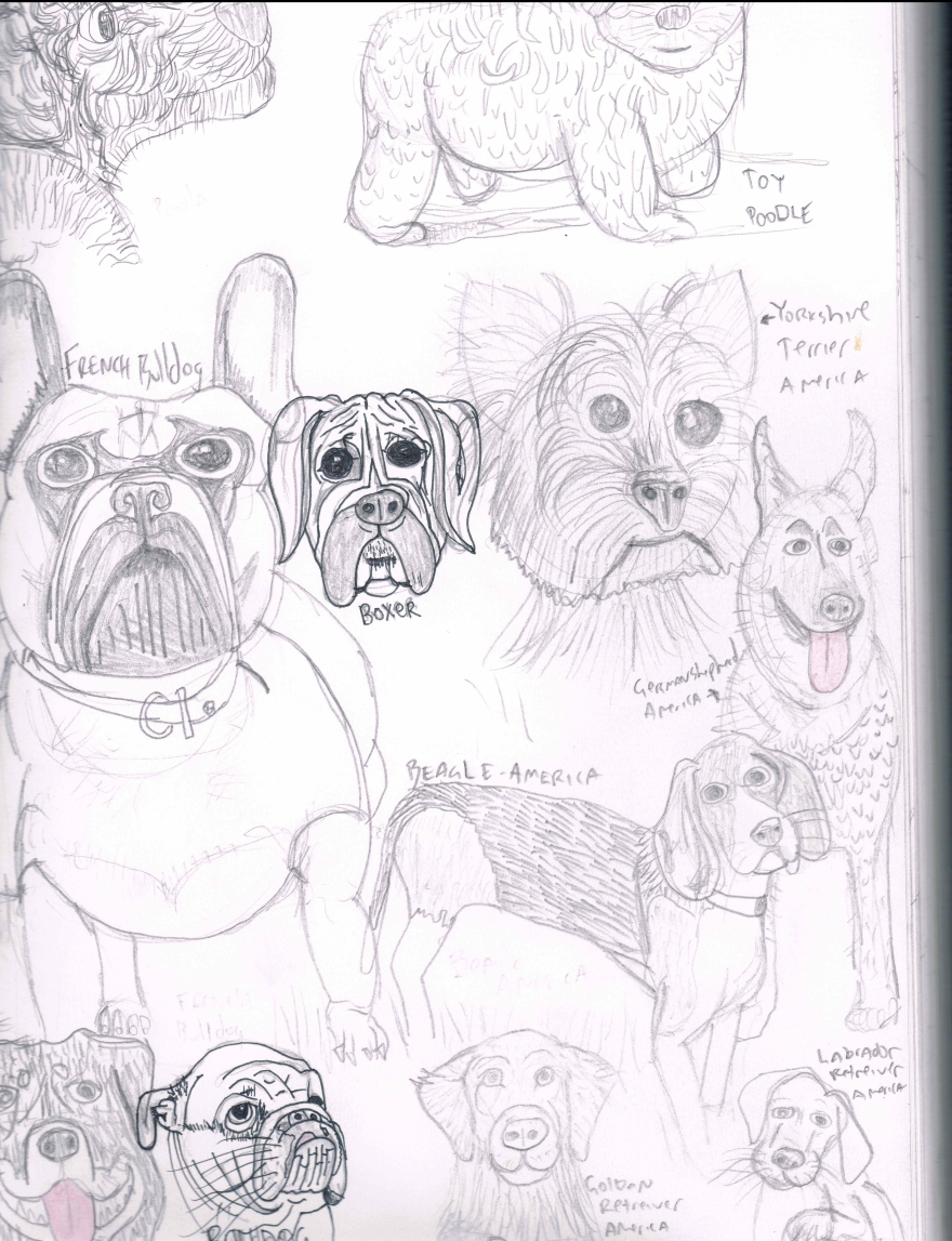 12 most popular dog breeds in America